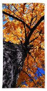Old Elm Tree In The Fall Beach Towel