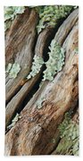 Old Wood And Lichen Beach Towel