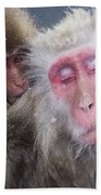 Older Snow Monkey Being Groomed By A Beach Towel