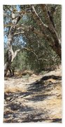Olive Trees At Sebastia Beach Towel