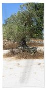 Olive Trees In Samaria Beach Towel
