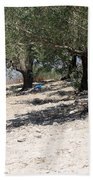 Olive Trees In Sebastia Nablus Beach Towel