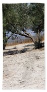 Olive Trees Standing Alone Beach Towel