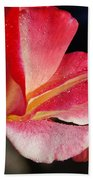 Open Rose After The Rain Beach Towel