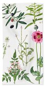 Opium Poppy And Other Plants  Beach Towel by  Elizabeth Rice