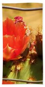 Orange Cactus Flower With Fence Beach Towel