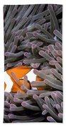 Orange Clownfish In An Anemone Beach Sheet