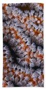 Orange Gorgonian Sea Fan With White Beach Towel