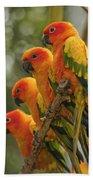 Orange Parakeets Chiang Mai Thailand Beach Towel