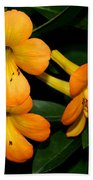 Orange Rhododendron Flowers Beach Towel