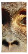 Orangutan Eyes Borneo Beach Towel