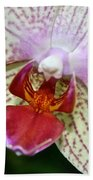 Orchid Close Up Beach Towel