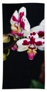 Orchid Flowers Against Black Background Beach Towel