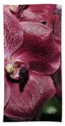 Orchid Vanda And Ascocenda Hybrid II Beach Towel