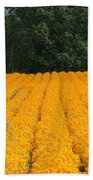 Oregon Orange Field Beach Towel
