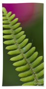 Ornamental Fern Beach Towel