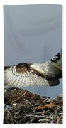 Osprey 2 Beach Towel