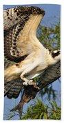 Osprey Flight Beach Towel