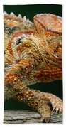 Oustalets Chameleon Furcifer Oustaleti Beach Towel