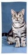 Outstanding American Shorthair Cat Beach Towel