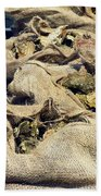 Oysters Galore Beach Towel
