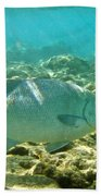 Pacific Chub 1080113.jpg Beach Towel