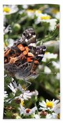 Painted Lady - Surrounded In White Beach Towel