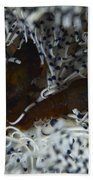 Pair Of Brown Snapping Shrimps Beach Towel
