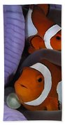 Pair Of Clown Anemonefish, Indonesia Beach Towel