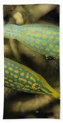 Pair Of Comet Fish, Australia Beach Towel by Todd Winner