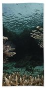 Pair Of Lionfish, Indonesia Beach Towel