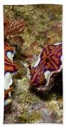 Pair Of Miamira Magnifica Nudibranch Beach Towel