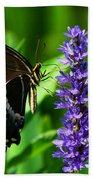 Palamedes Swallowtail Butterfly Beach Sheet