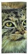 Pallas Cat Beach Towel