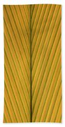 Palm Leaf Showing Midrib And Veination Beach Towel