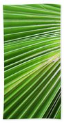 Palm Tree Frond Beach Towel