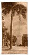 Palm Tree Beach Towel by Trish Tritz