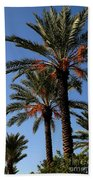Palms9895b Beach Towel