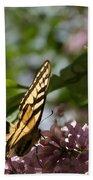 Papilio Glaucus   Eastern Tiger Swallowtail  Beach Towel