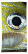 Parasitic Isopod On Grunt, Belize Beach Towel