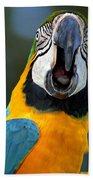 Parrot Squawking Beach Towel