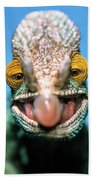 Parsons Chameleon Calumma Parsonii Beach Towel