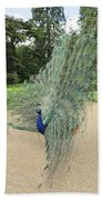 Peacock Glory Beach Towel