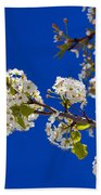 Pear Spring Beach Towel by Chad Dutson