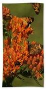 Pearly Crescentpot Butterflies Landing On Butterfly Milkweed Beach Towel