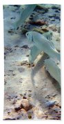 Pebbles And Fins Beach Towel