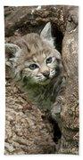 Peeking Out - Bobcat Kitten Beach Towel