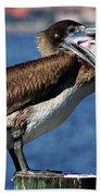 Pelican I Beach Towel