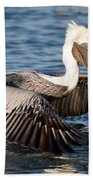 Pelican Take Off Beach Towel