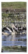 Pelicans At Knuckey Lagoon Beach Towel